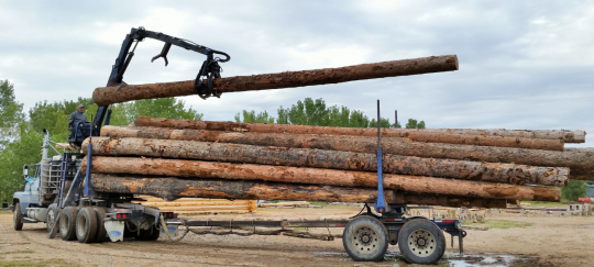 Timber Selection